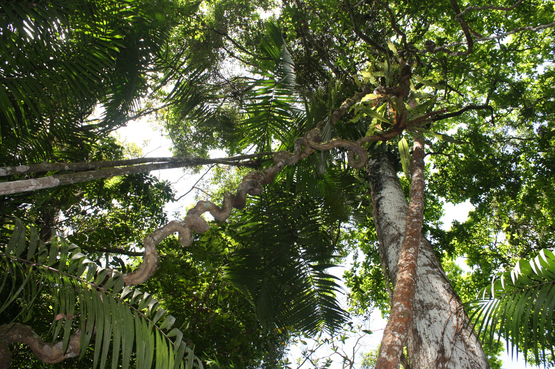 Forests: A natural solution to climate change, crucial for a sustainable future   United Nations Development Programme