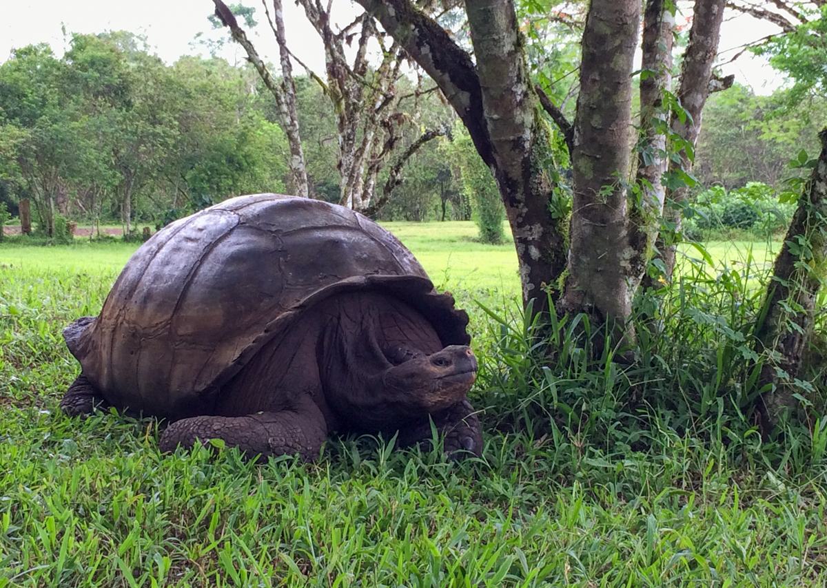 Make Charles Darwin proud; save the Galapagos from your living room   United Nations Development Programme
